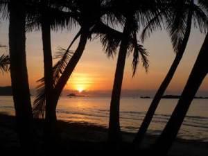 Sunrise Chilli Beach through the palm trees