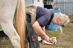 Local farrier shoeing the horses