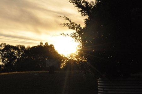 Photo of the sunsetting behind the Leaves & Fishes restaurant, Lovedale