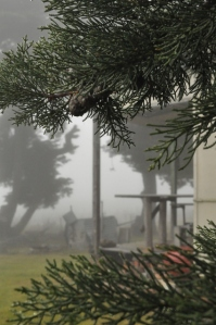 Photo of fog surrounding the house and trees