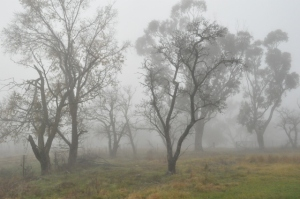 Photo of bare winter trees through the fog