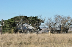 Picture of the old farmhouse through the trees