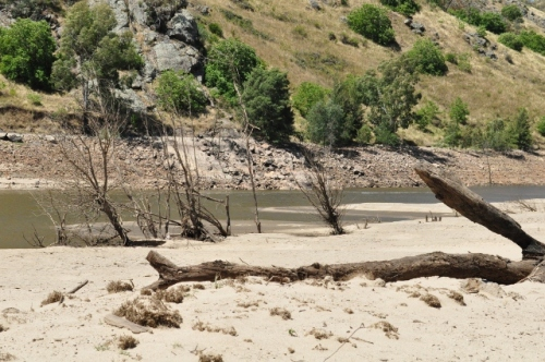 Dead trees and driftwood on what used to be the riverbed