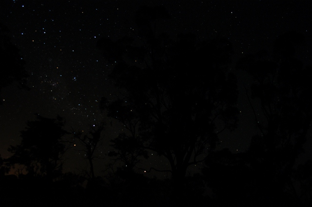 A million stars blaze in the night sky through a sillouhette of gum trees