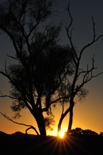 Sunset through the gum tree