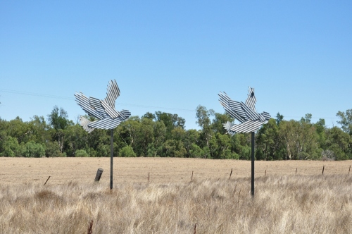 Galahs heading into Gulargambone