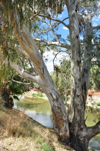 On the Darling River