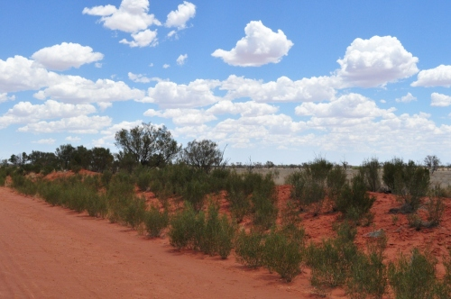 The vivid red, green and blue of the outback