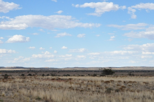 Flat, scrubby country Wilcannia - White Cliffs