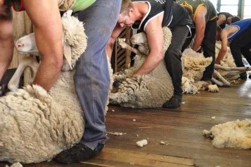 Shearing sheds - Just like Tom Roberts